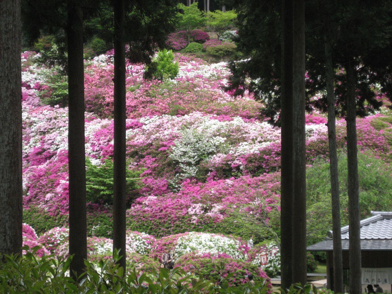 京都観光タクシー同友会の京都観光メニュー宇治・醍醐周辺メニュー